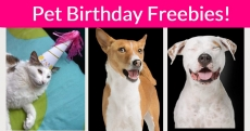 Pet's Birthday Freebies! STOCK UP!