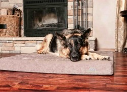 Enter for a Deluxe Orthopedic Dog Bed!