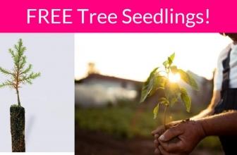 EASY!  Free Tree Seedling or Free Wildflower Seed Card!