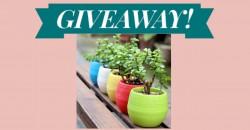 Enter to Win Fiberglass Garden Planters