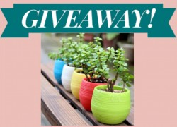 Enter to Win Fiberglass Garden Planters