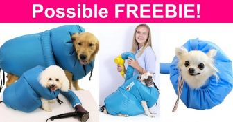 Possible FREE Pet Dry Jacket. 🤣