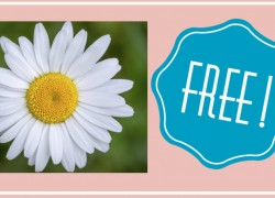 Send a Daisy To A CHILD With Cancer – FREE!