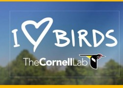 Get a FREE I Love Birds Decal!