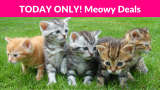 Meowy Favorites Deals