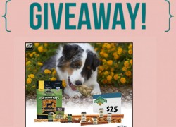 5 Lucky Dog Owners Will Win !