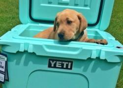 Win a Yeti Cooler!!