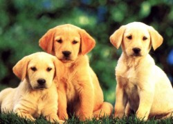 Win a HUGE Pet Product Bundle!