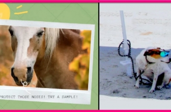 Easy Free Sample By Mail of 4 Legged Sunblock!