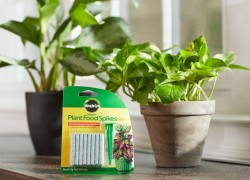 Going Quick!  Miracle-Gro Indoor Plant Food, 48-Spikes Just $1.57!