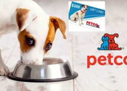Enter to win a $200 Petco Gift Card!
