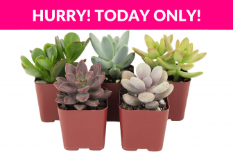 Shop Succulents Indoor Succulent Plants