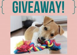 Win a 10 Pack of Chew Toys for you Dog!